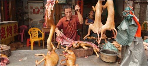 comes-carne-de-perro-pregunta-dificil-de-contestar_1836713